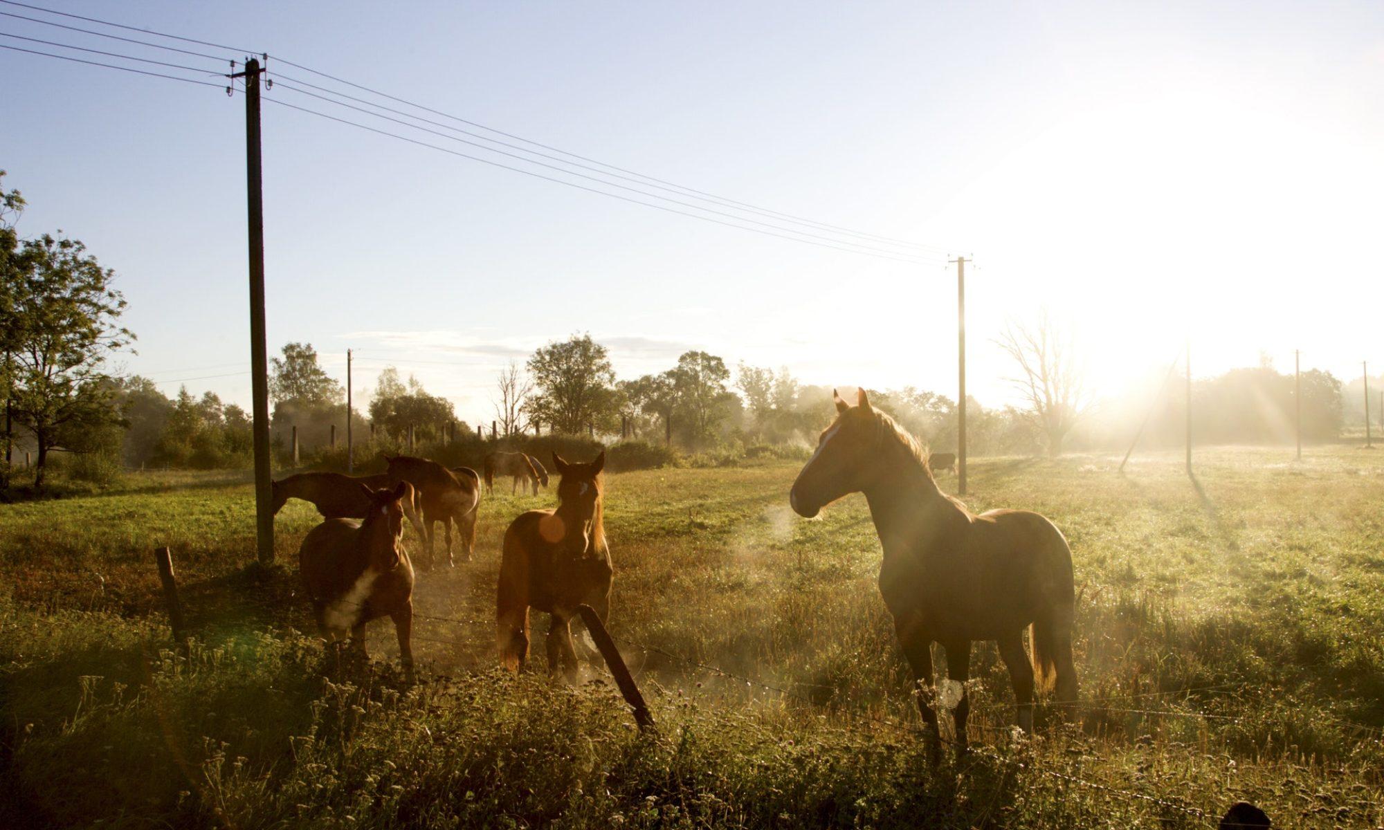 Lilydale & Mooroolbark Pony Club